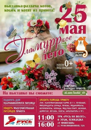 """Выставка-раздача кошек """"ГлаМУРРное лето"""""""