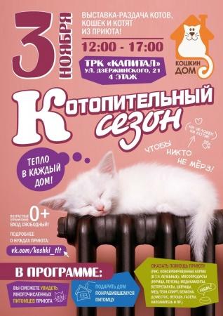 Выставка-раздача котят и кошек